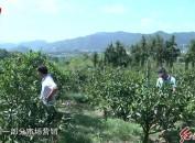 培育新型職業農民加快現代農業發展