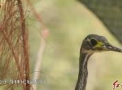 長汀村民救助并放生國家二級保護動物
