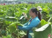 連城:依托特色農業優勢   產業扶貧助力穩固脫貧