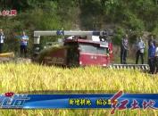 新增耕地 稻谷飄香