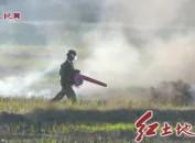 上杭、連城、漳平:多措并舉 筑牢森林防火安全屏障