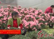 """漳平:做好""""花卉+""""文章??助力產業提檔升級"""