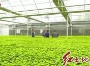 長汀南山:標準化育苗 打造優質千畝百香果基地