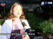 春节前花卉市场渐升温 创意组合盆栽受青睐