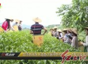 台湾农民在大陆首次获得农村实用人才专业技术资格证书