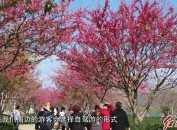 (网络中国节.春节)旅游添彩年节市场持续火热