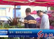 漳平:靓丽花卉俏销市场