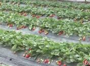 新罗:加大农产品质量安全监管监测 确保两节期间舌尖上的安全
