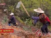 长汀:新春植树造林忙 疫情防控和精准治理两不误