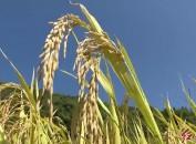 我市项目化推进农业农村重点工作有序进行