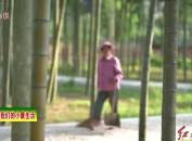 武平东留黄坊村:着力实施人居环境整治 田园变靓成乐园