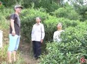 上杭县下都镇:激励性扶贫项目助力贫困户稳定增收