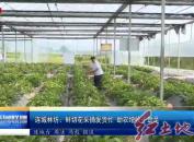 连城林坊:鲜切花采摘发货忙  助贫增收干劲足
