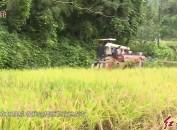 新罗适中:机械化作业助力1.9万亩水稻稳产丰收