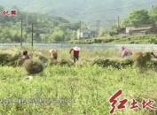 连城:全力推进土壤污染风险防控试点工作