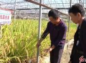 上杭:举行水稻新品种展示示范现场观摩暨优质稻推广培训活动 加快优质稻新品种展示示范推广 促进粮食增产增收