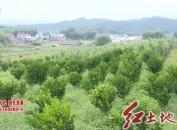 武平:畜禽粪污资源化利用 开启生态养殖绿色循环新模式
