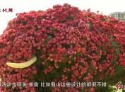 龙岩紫金山首届城市国风菊花展开展