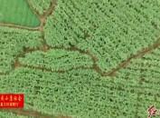新罗大池:聚力产业谋发展 振兴乡村奔小康