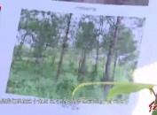 龙岩:守护绿水青山 实现百姓富生态美