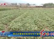 建設甘薯綠色標準化生產基地助農增收