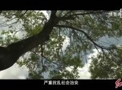 绿满山原千鹭翔