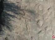 上杭发现恐龙足迹群