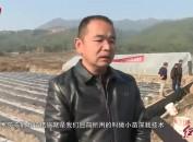 连城:加强防冻深栽技术指导稳增收