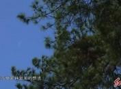 龍巖黨史學習教育進行時?系列視頻29 守魂