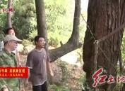 """郑宏:着力提升森防检疫工作水平 守护森林""""健康"""""""