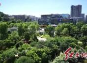 龙岩石锣鼓公园古泉景观提升改造完成