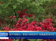 武平观狮山:最美人间四月天 杜鹃盛放漫山红