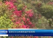龙岩红尖山杜鹃花盛开美如画