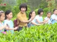 以茶促旅 以旅兴茶  推动茶旅融合发展