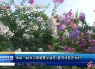 连城:城市公园紫薇花盛开 夏日赏花正当时