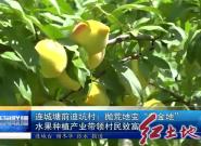 """连城塘前迪坑村:抛荒地变""""黄金地"""" 水果种植产业带领村民致富"""