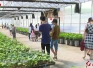 中国地瓜主题公园开园?游客共同体验地瓜文化