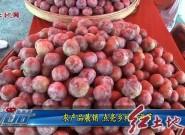 农产品展销点亮乡村旅游节