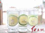 新罗:百亩台湾青柠檬进入成熟采摘期