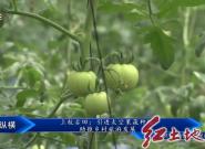 上杭古田:引進太空果蔬種植 助推鄉村旅游發展