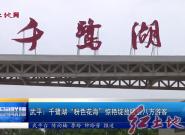 """武平:千鷺湖""""粉色花海""""驚艷綻放吸引八方來客"""