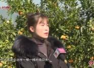 """漳平和平:沃柑飘香 """"甜""""了游客"""