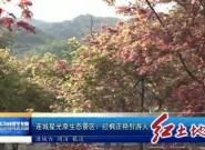 连城星光原生态景区:红枫正艳引游人