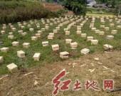 上杭湖洋镇:开展养蜂技术培训 深度助推产业扶贫