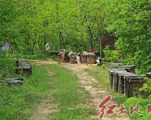 上杭泮境乡:蜜蜂养殖基地科技扶贫,贫困户养蜜蜂稳定脱贫