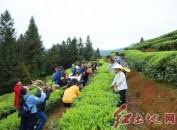 武平县桃溪镇举办第五届梁野山采茶文化旅游节