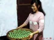连城县传统清明粄成新宠