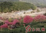 (新春走基层)连城县黄宗村曾炳旺夫妇清洁道路迎嘉宾