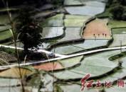 """连城县赖源乡——""""人文+生态+美食"""" 田园如画引游人"""
