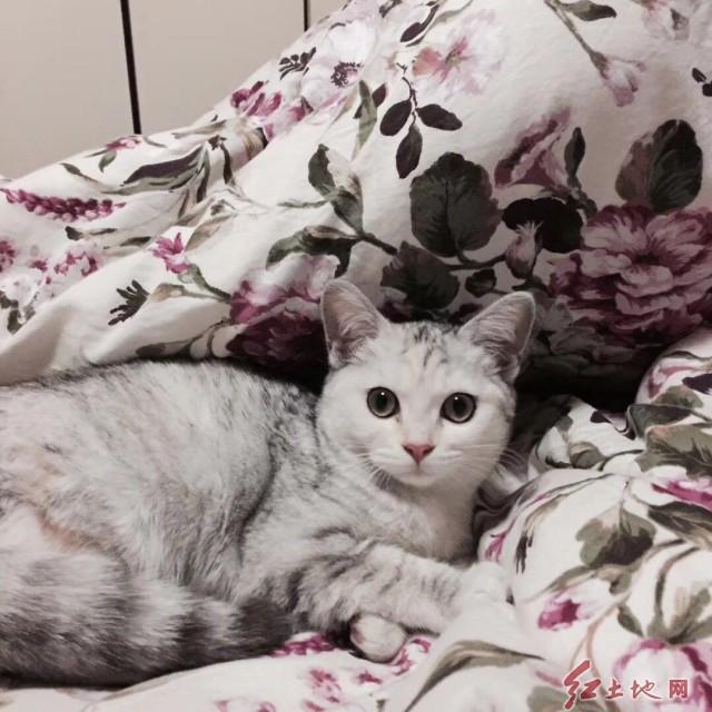今天来跟大家说一说猫:  猫在人们心目中总有着特殊的地位,它不像狗那么讨人欢心,甚至于在有的时候你会以为它根本不在注意你。  其实呢,在猫的心目中并没有主人这个概念,对于它而言你只是个朋友而已,不过是个非常重要的朋友。  那既然是朋友,首先地位便是平等的。不存在谁高谁低,它心情好的时候可能会找你撒个娇卖个萌。心情不好的时候可以完全不理睬你。它可以调皮可以捣乱可以肆无忌惮,因为它是你朋友  也许猫不像狗一样把你当做他的全世界,但是对于猫来说你也一定是它短暂生命中的重要一员。  猫其实很像个渣男,总结下来就是